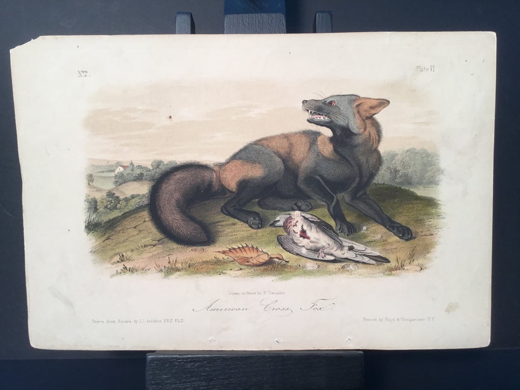 Lord-Hopkins Collection - American Cross Fox