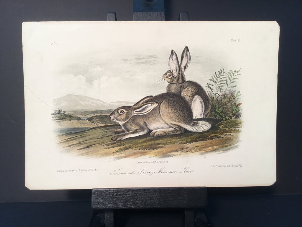 Lord-Hopkins Collection - Townsend's Hare