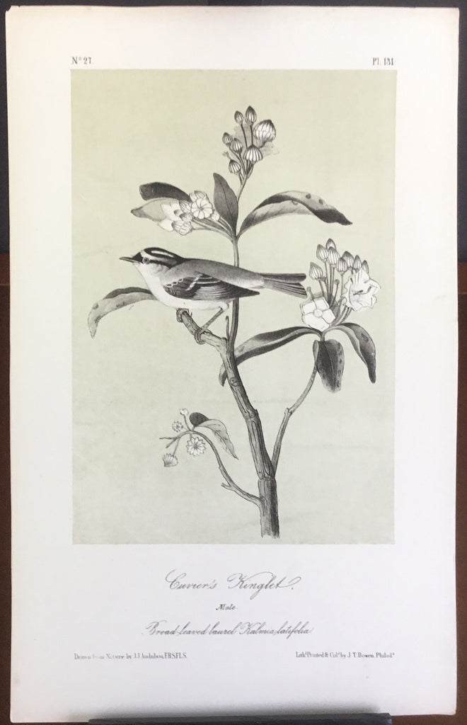 Audubon Octavo Cuvier's Kinglet, plate 131, uncolored test sheet, 7 x 11