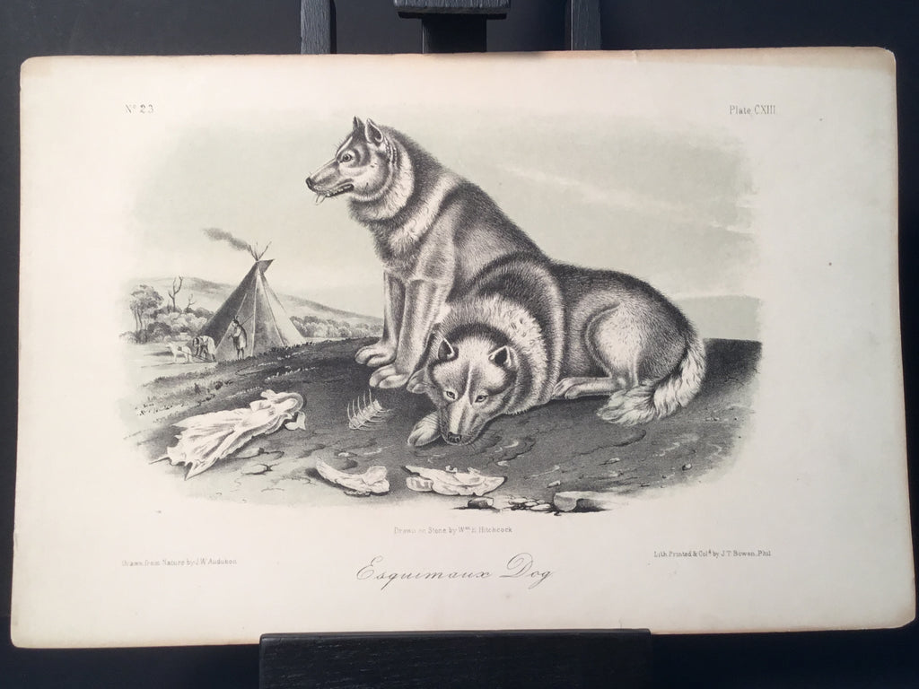 Lord-Hopkins Collection - Esquimaux Dog (uncolored)