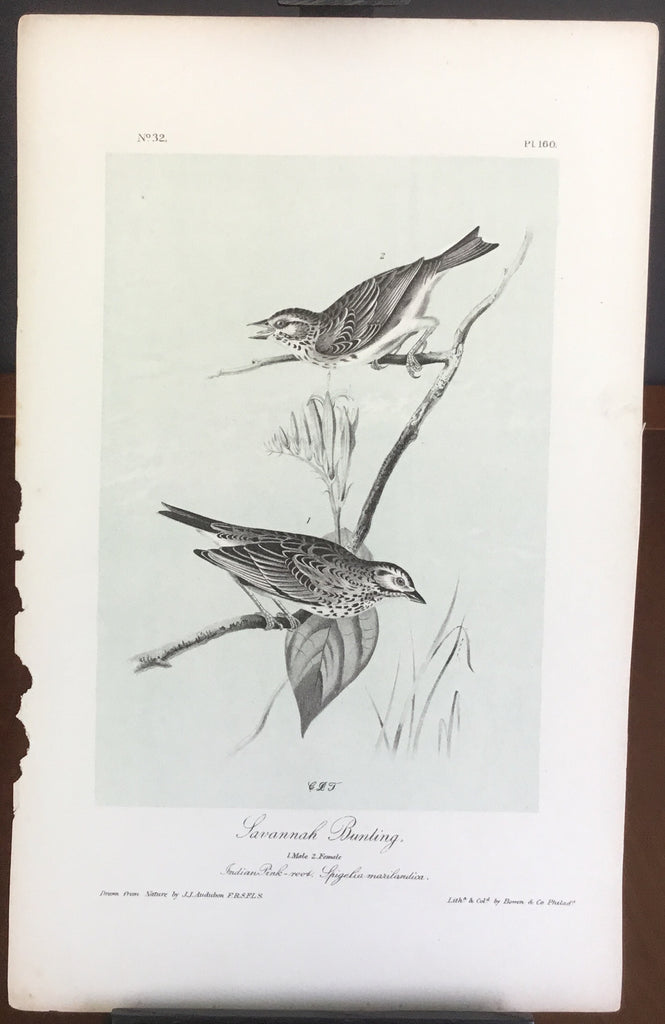 Audubon Octavo Savannah Bunting, plate 160, uncolored test sheet, 7 x 11