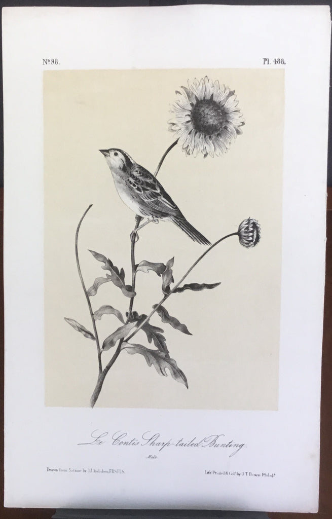 Audubon Octavo Le Contis Sharp-tailed Bunting, plate 488, uncolored test sheet, 7 x 11