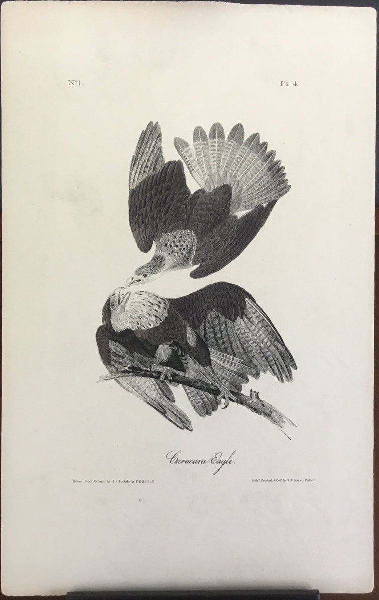 Audubon Octavo Caracara Eagle plate 4 x uncolored test sheet. 7 x 11 (clear background)