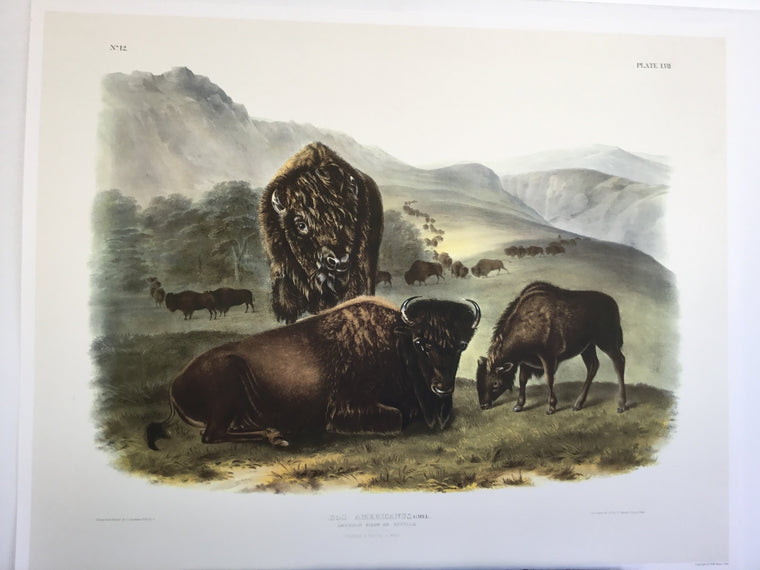 Special offer- Set of two Audubon Imperial Buffalo prints
