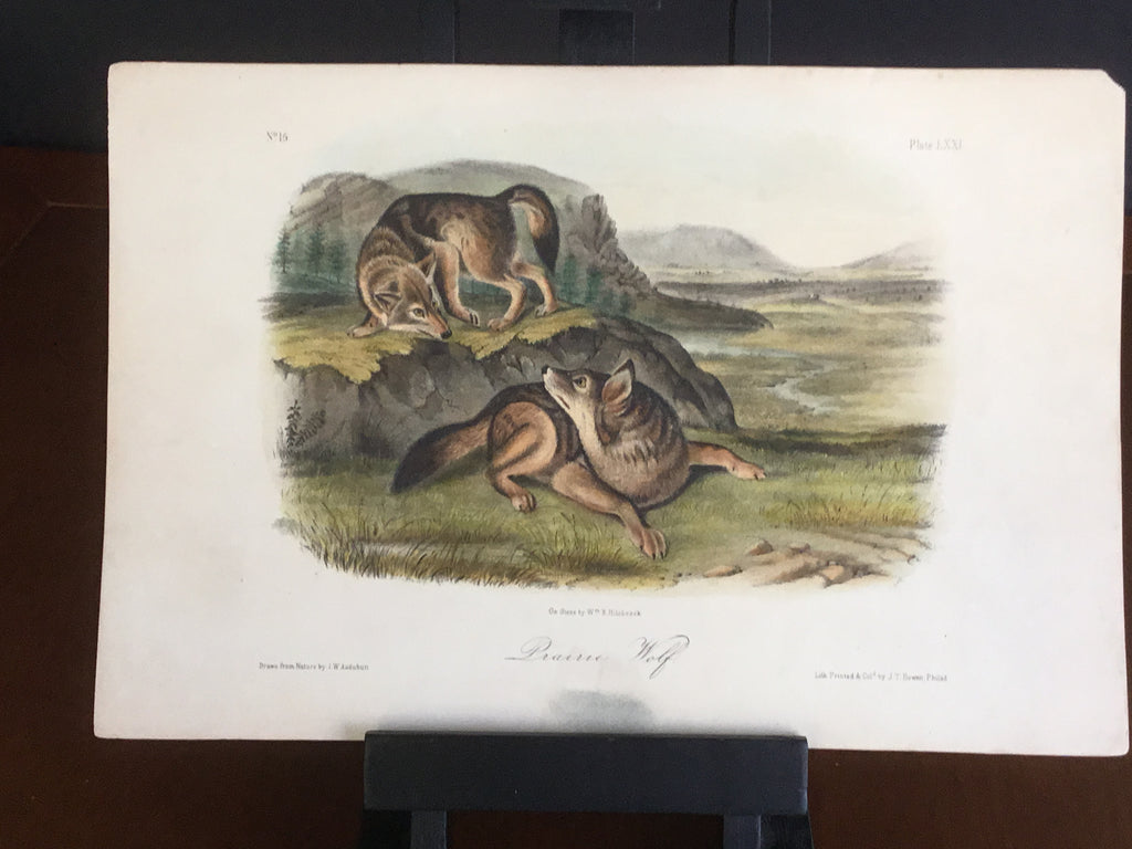 lord-Hopkins Collection Audubon Octavo Quadruped - Prairie Wolf