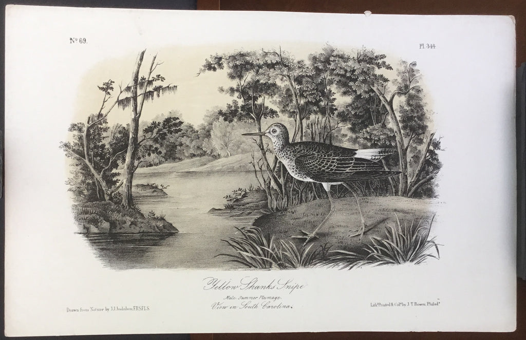 Audubon Octavo Yellow Shanks Snipe, plate 344, uncolored test sheet, 7 x 11