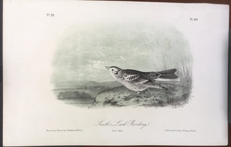 Audubon Octavo Smith's Lark Bunting, plate 487, uncolored test sheet, 7 x 11