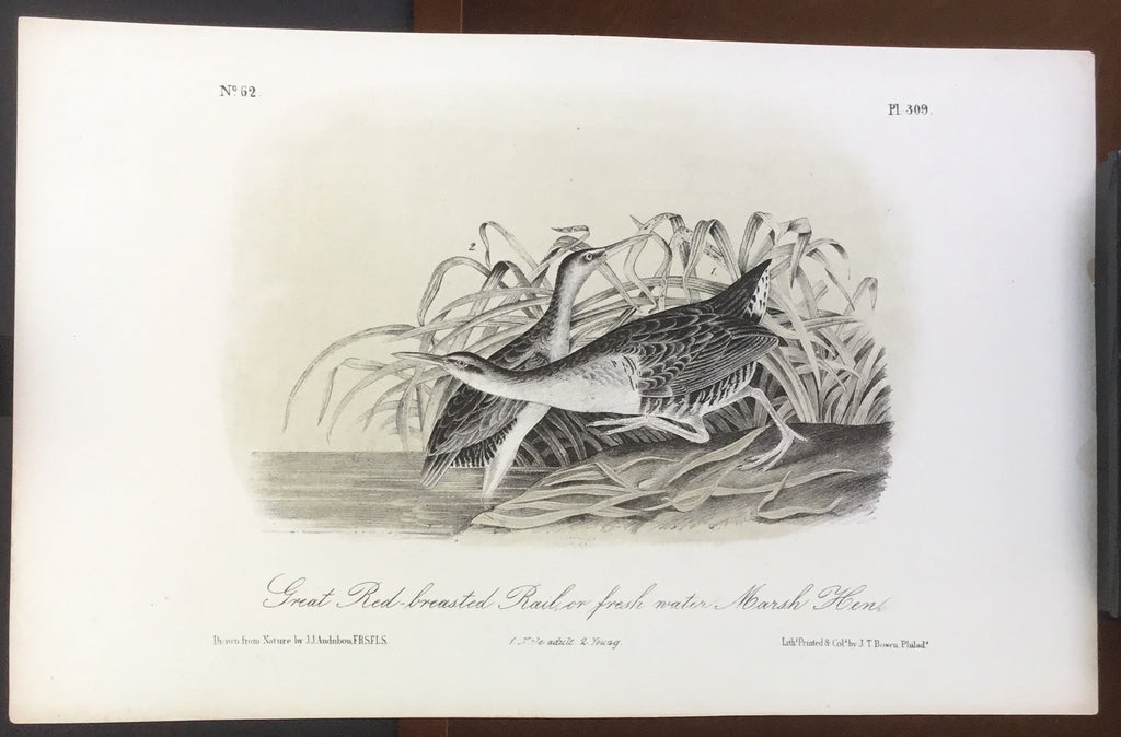 Audubon Octavo Great Red-breasted Rail, plate 309, uncolored test sheet, 7 x 11