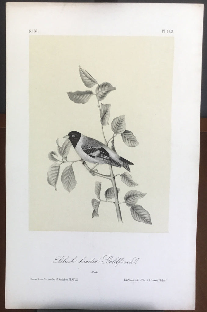 Audubon Octavo Black-headed Goldfinch, plate 182, uncolored test sheet, 7 x 11
