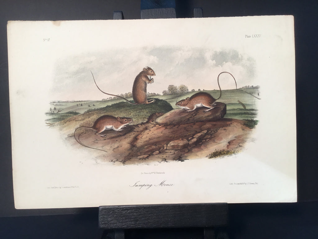 Lord-Hopkins Collection - Jumping Mouse