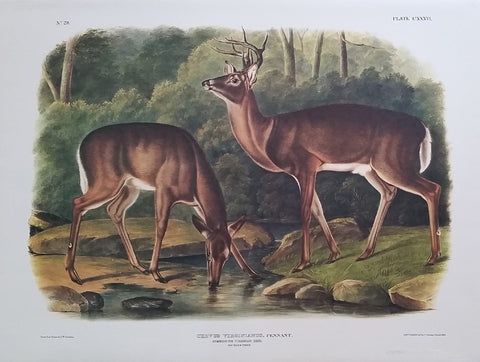 Princeton Imperial Common Deer edition of 750
