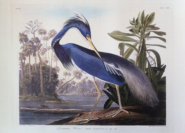 Essex Edition Louisiana Heron  Measures 19 x 23 inches.