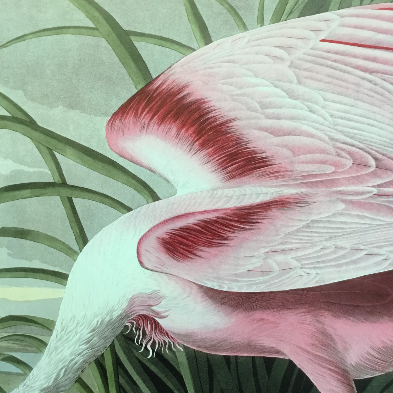 Essex Edition Roseate Spoonbill