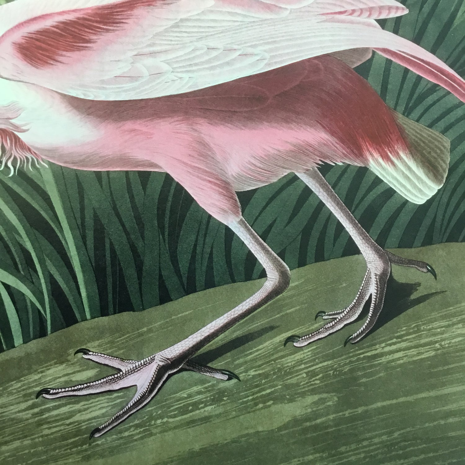 Essex Edition Roseate Spoonbill, 19 x 23 inches.