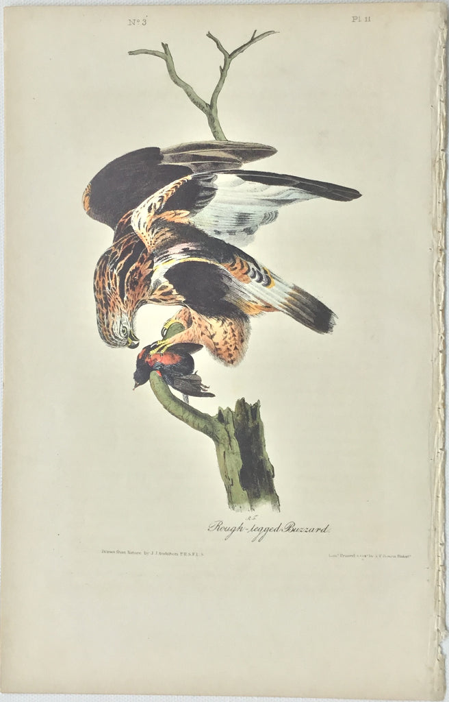 Original Audubon Octavo Rough-legged Buzzard, plate 11