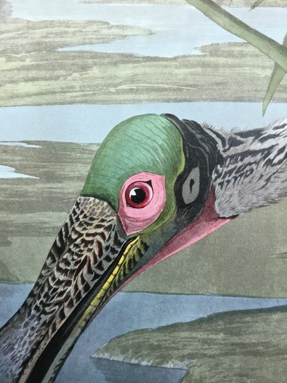 Essex Edition Roseate Spoonbill  Measures 19 x 23 inches.