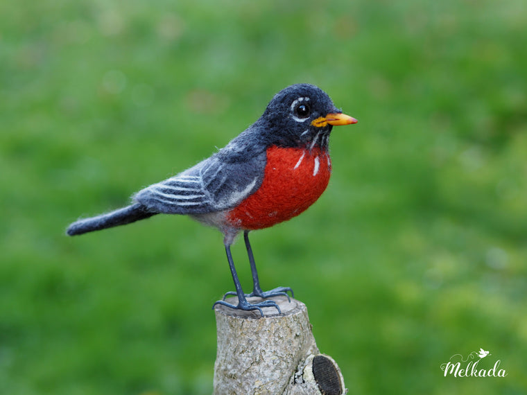 American robin felt faux taxidermy bird