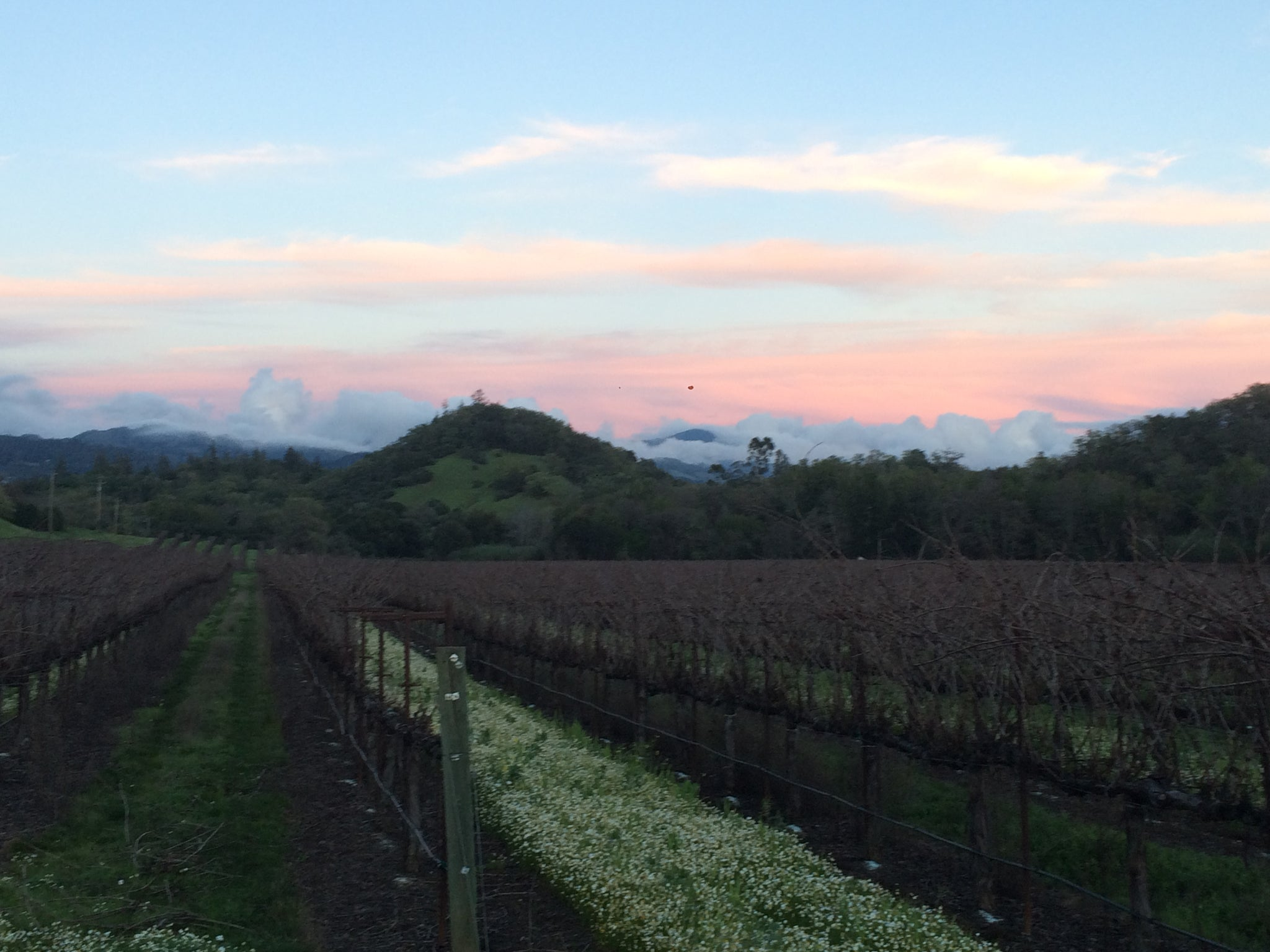View from the vineyards on the same property as Narrow Bridge Candles.