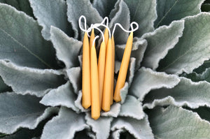 four pairs of beeswax candles are nestled into a mullein plant