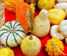Vegetables – Mini squash or yumpkins