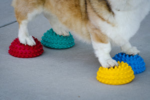 FitPAWS Paw Pods - set van 4 in diverse kleuren