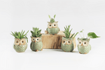 Ceramic Owl-Shaped Flower Pots (5PCS/Lot) - Farertop