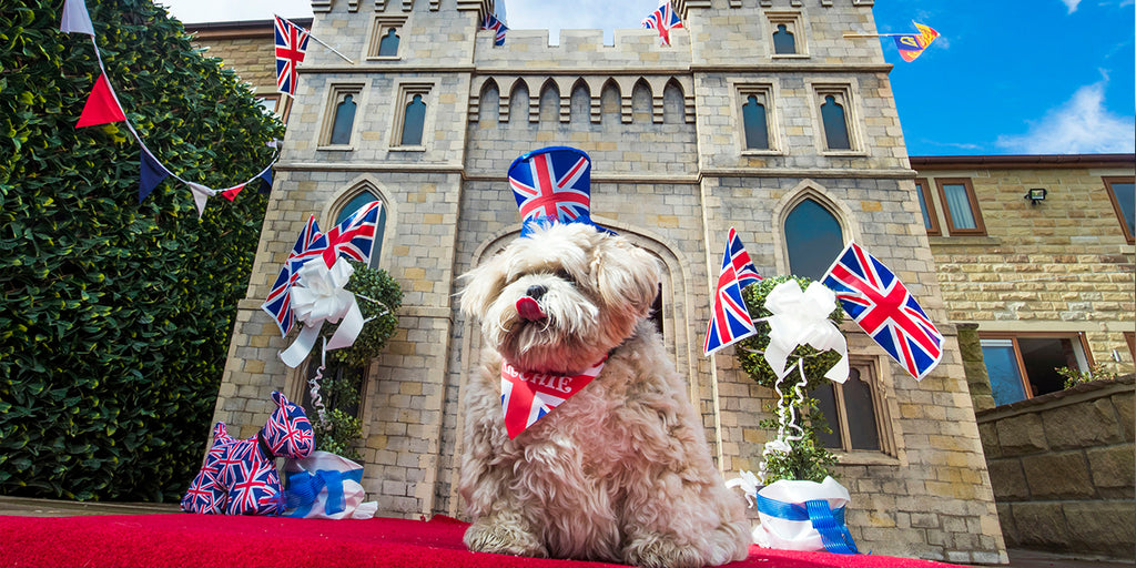 A Windsor Castle replica has been created for family dog to enjoy the Royal Wedding in style!