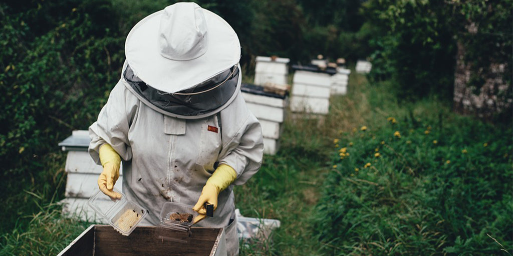 The romantic journey from flower to pot: why honey will always create a buzz