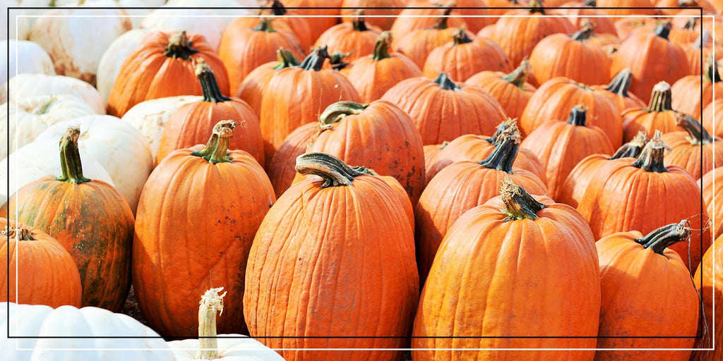 The Best pick your own pumpkin locations in the UK