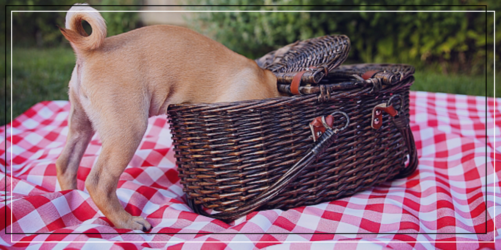 10 essentials to picnic with your pets!