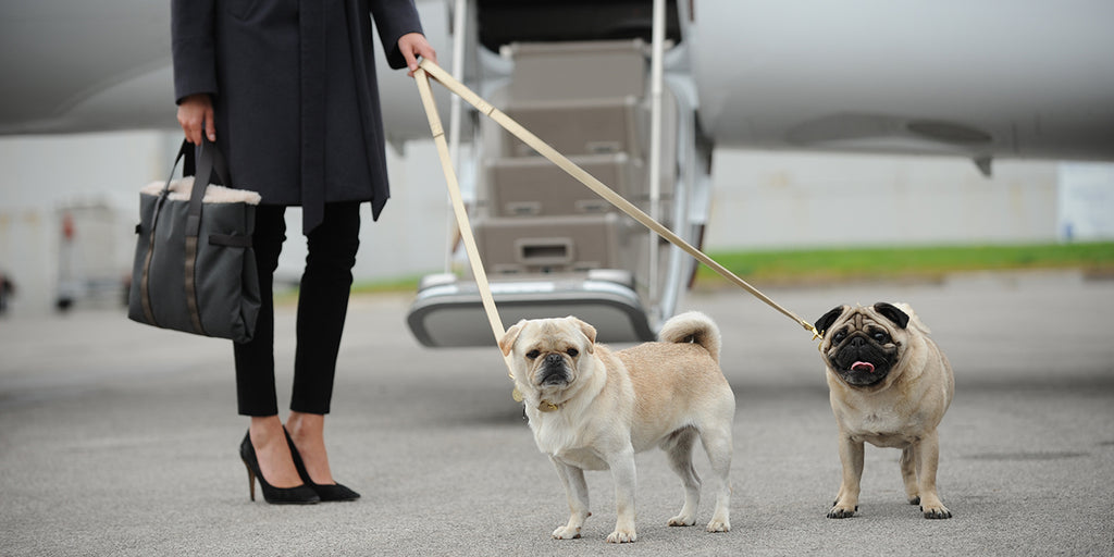 Style File: designer dog accessories