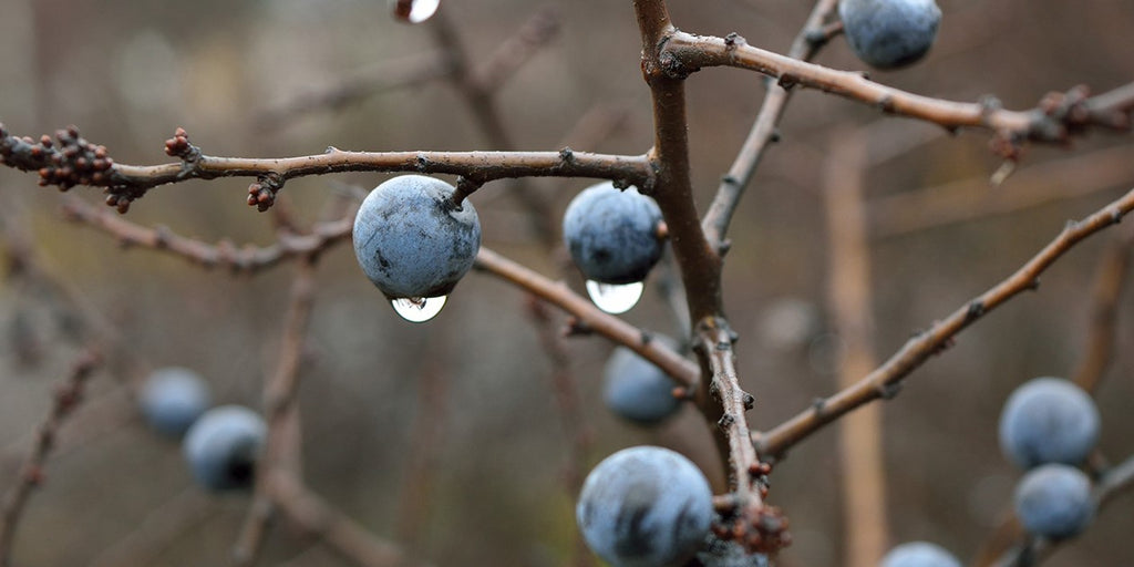 Sloe Gin. Short Tales of British Creation and Invention.