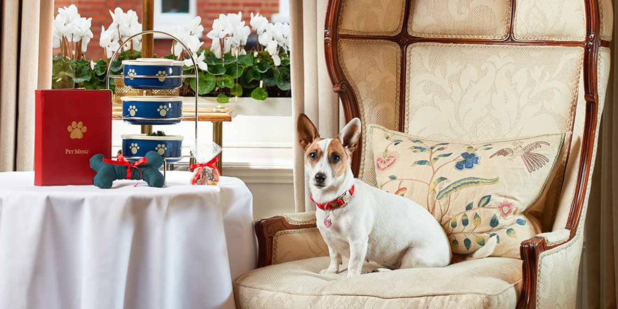 Doggy Afternoon Tea at The Egerton House Hotel