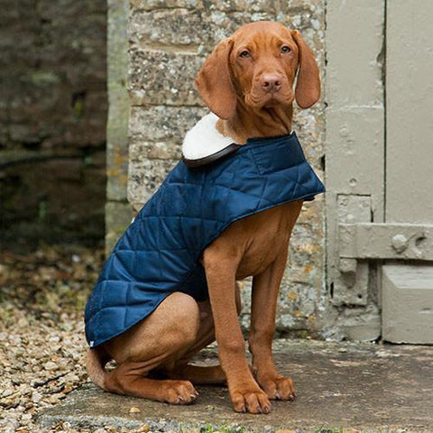 Luxury Navy Quilted Coat  - Mutts and Hounds