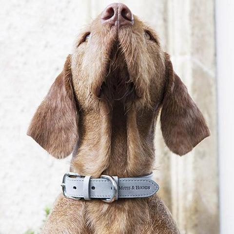 Luxury Grey Leather Dog Collar  - Mutts and Hounds