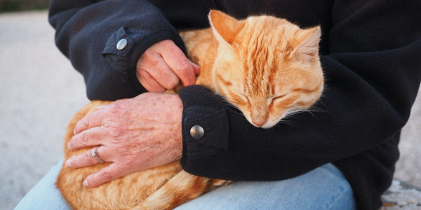Saying Goodbye to Your Pet: Thoughts From a Veterinarian