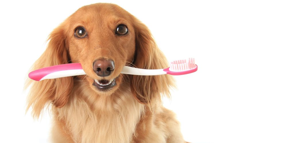 Frequently Asked Pet Dental Care Questions