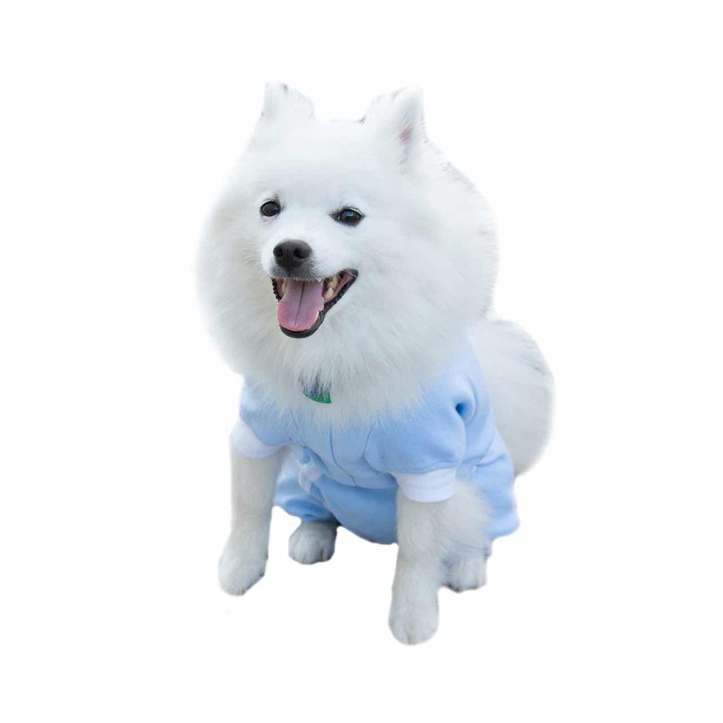 A Japanese Spitz wearing a blue Cover Me by Tui Dog Cone Alternative