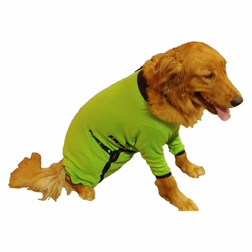 A Golden Retriever wearing a green Cover Me by Tui Dog Cone Alternative