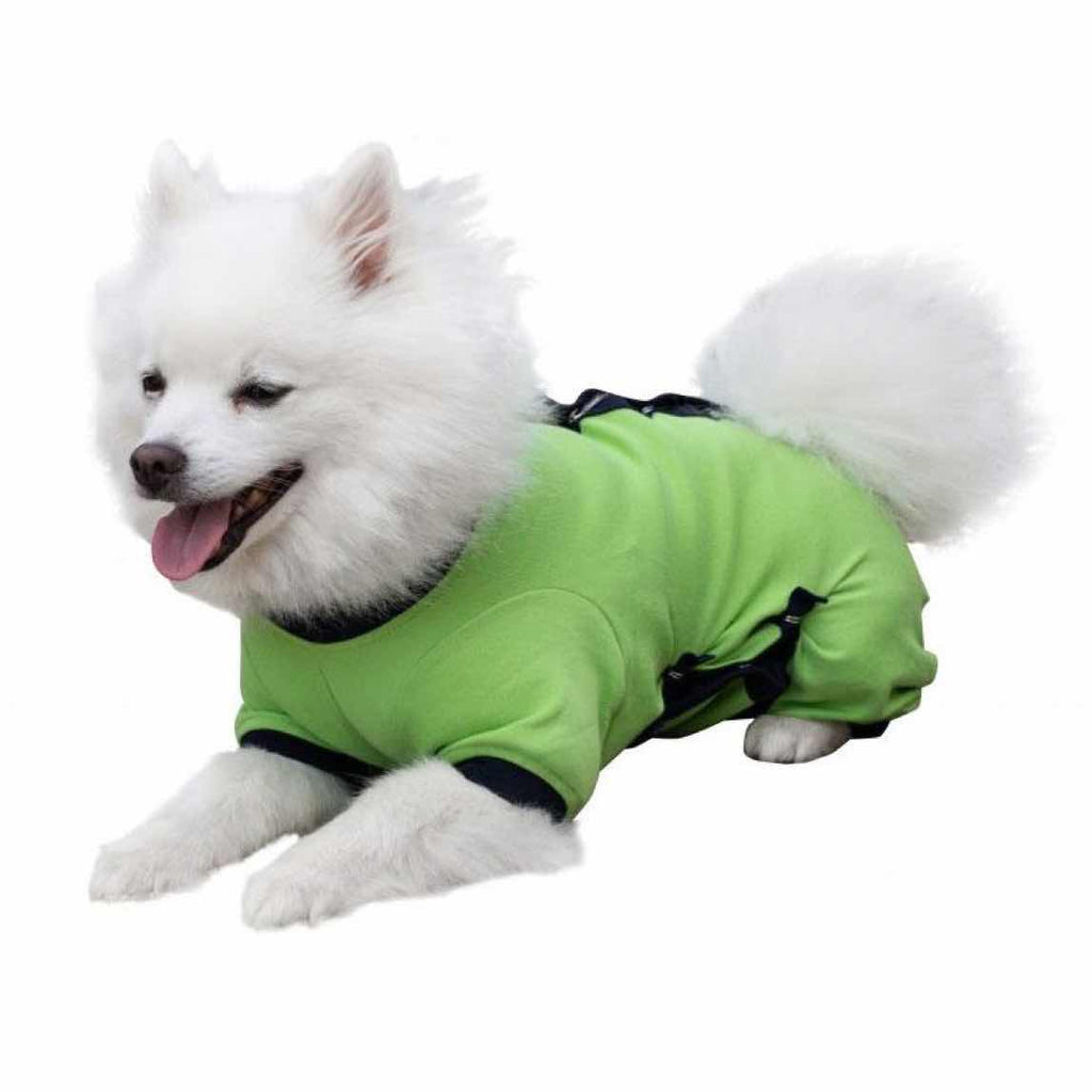 A Japanese Spitz wearing a green Cover Me by Tui Dog Cone Alternative
