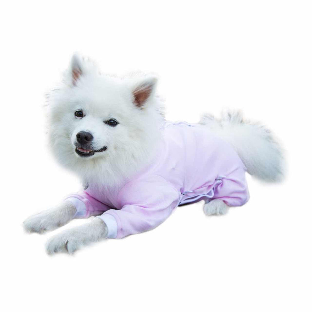 A Japanese Spitz wearing a pink Cover Me by Tui Dog Cone Alternative