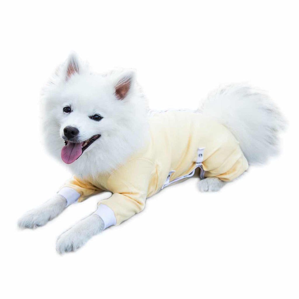 A Japanese Spitz wearing a yellow Cover Me by Tui Dog Cone Alternative