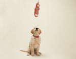 Sneaker Rope Pet Toy