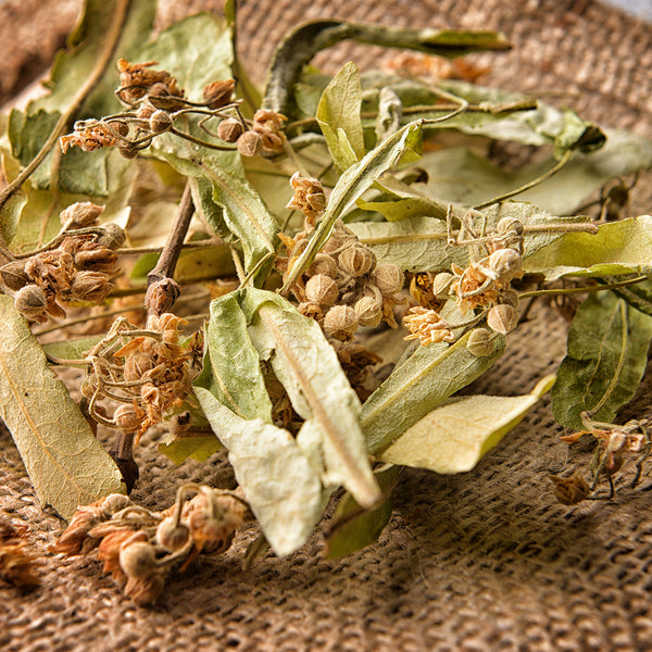 Linden Dried Leaves and Flowers - Tilia Lime Tree - Tisane