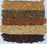 Millet Brown - Proso Panicum Miliaceum Seeds - Bird Food