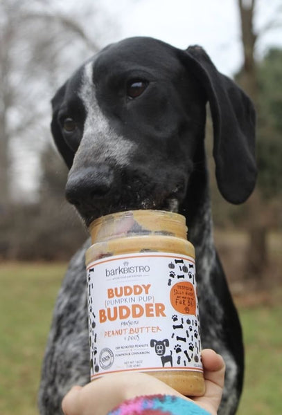Pumpkin Pup BUDDY BUDDER