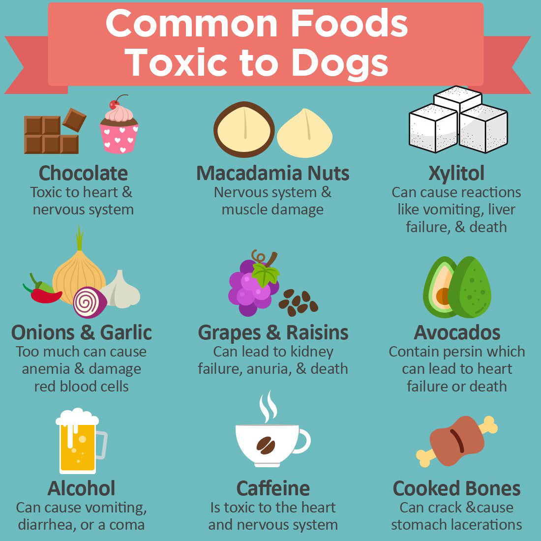What Foods to AVOID for Fido