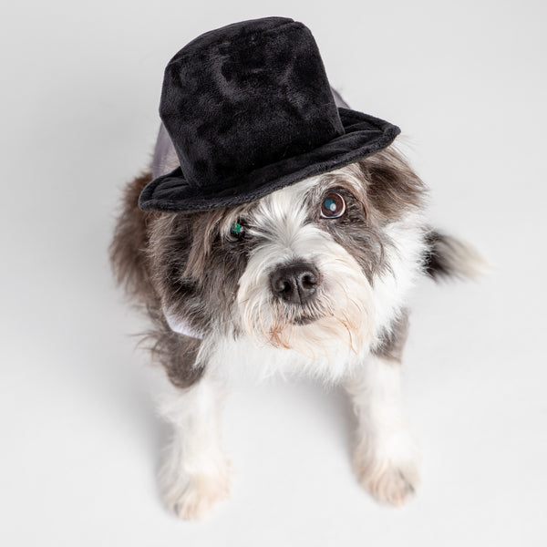 Dog Wedding Costume -  Tuxedo Hat