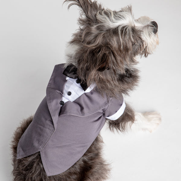 Dog Wedding Costume - Tuxedo
