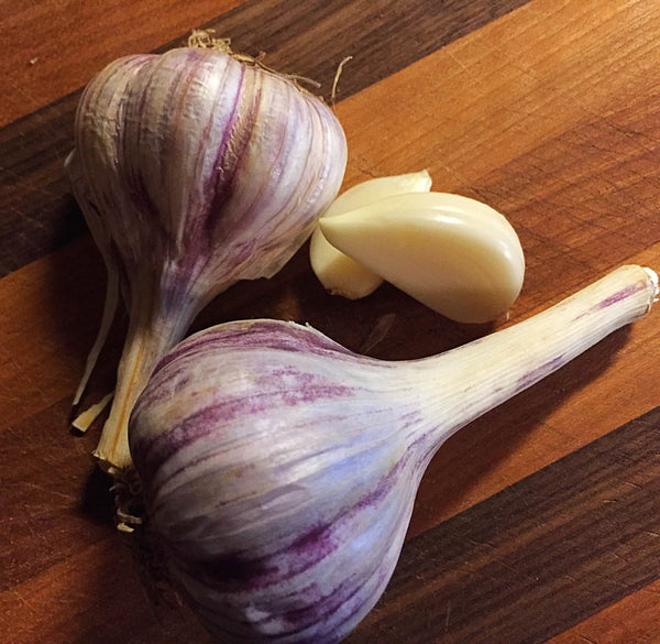 Garlic for Dogs? Yes!